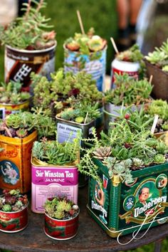 Indoor Container Gardening Windowsill Gardening on the Cheap: Vintage-Style Tin Herb Gardens - I stumbled on the idea of using tea tins for a mini container garden the other day when looking around for an attractive option that would fit on my windowsill Cacti And Succulents, Planting Succulents, Planting Flowers, Succulent Planters, Succulent Ideas, Succulent Display, Cacti Garden, Succulent Containers, Fairies Garden