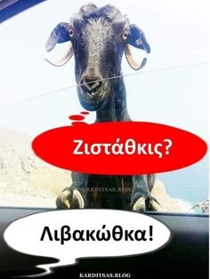Funny Greek Quotes, Lol, Humor, Funny Shit, Movie Posters, Animals, Humour, Animais, Animales