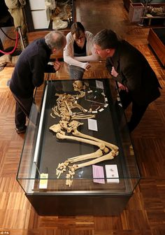 Dying moments: Experts also discovered signs of a cut to Racton Man's right… Skeleton Warrior, Bronze Age, In This Moment, Signs, Shop Signs, Sign