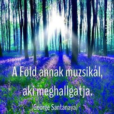 Characters in historical novels often go for a walk to see the bluebell wood. Sunlight on the enchanted forest of bluebells Enchanted Forest Scotland, Magical Forest, Beautiful World, Beautiful Places, Beautiful Forest, Amazing Places, Spanish Bluebells, Blue Forest, Forest Wallpaper