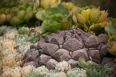 La Dioscorea Mexicana es una de las plantas más increíbles, ya que aunque parece una roca en realidad en una planta de la zona de Oaxaca y Veracruz. Fruit, Landscaping, Vegetable Recipes, Landscape, Mexican, Plants, Projects