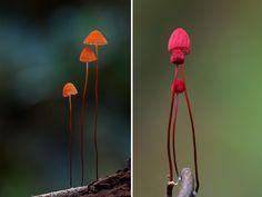 Ces champignons incroyables vont vous étonner et vous émerveiller par leur beauté bizarre ! On n'aurait jamais cru que de tels êtres vivants peuplent notre planète...
