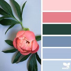today's inspiration image for { flora hues } is by @diana_lovring ... thank you, Di, for another amazing #SeedsColor image share!