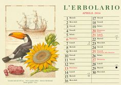 """Benvenuto #aprile! Questo mese ci fa compagnia un simpaticissimo Tucano (Ramphastos toco), un """"helianthus annuus"""" - ovvero il Girasole- e la Patata, tubero proveniente dall'America meridionale ma che da secoli è immancabile anche nell'alimentazione europea! Buona giornata!"""