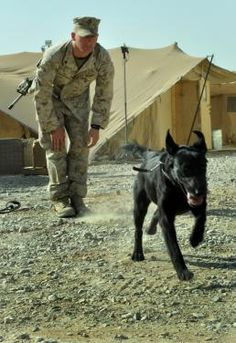 The dogs of war: saving lives but paying the price