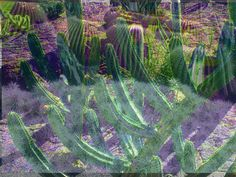 A Flora Kaleidoscope - our gallery of Flora & Fauna designs. Cacti, Cactus Plants, Flora And Fauna, Layers, Gallery, Collection, Design, Layering, Roof Rack
