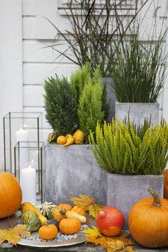Vibeke Design, Vignettes, Container Gardening, Fall Decor, Pumpkin, Wreaths, Seasons, Front Doors, Halloween