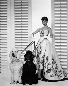 Audrey with poodles. I looove poodles!