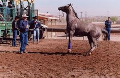 Hunting For Help, part 1   article about Ray Hunt, written by Jennifer K. Hancock via Eclectic Horseman magazine