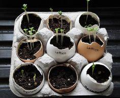 Pour recycler les coquilles et les boîtes d'oeufs   Voici une manière originale de faire ses semis printaniers ! En plus, vous éviterez les limaces grâce aux coquilles d'oeufs.