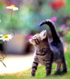 Cute Kitten - Taking a Little Stroll