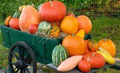 Im Herbst ist endlich die Erntezeit für Kürbisse gekommen. Wir haben unsere Facebook-User nach ihren Tipps und Tricks zur Pflege des leckeren Herbstgemüses gefragt. Hier finden Sie besonders hilfreiche Antworten.