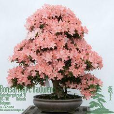 Wenn die Azalee ausgeblüht ist, bietet es sich an, ihr ein neues Zuhause in einem peppigen Blumentopf zu geben.