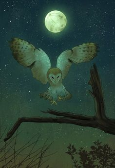 Night Owl by Sophie Eves