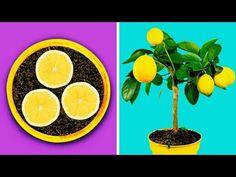 Timestamps Grow your seeds Succulent ideas Plant pots you can DIY -------------------------------------------------------------------------. Indoor Garden, Vegetable Garden, 5 Min Crafts, Growing Greens, Fruit Flowers, Plantation, Garden Projects, Garden Ideas, Garden Planning
