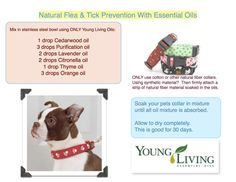 Essential Oils for Fleas Recipes | Hands In Harmony Inc.™ | Young Living Essential Oils | Holistic ...