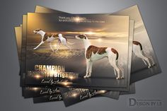 Quality adverts design for print and online magazines,Professional Web page Graphic Design. Advert Design, Web Design Services, Cattery, Graphic Design, Art, Art Background, Kunst, Visual Communication, Art Education
