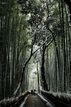 Bamboo pathway in snow, Kyoto, Japan 嵐山 京都
