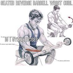 Seated reverse barbell wrist curl Fit Board Workouts, Fun Workouts, Free Weights, Arm Day, Gym Humor, Barbell, Physical Activities, Excercise, Biceps