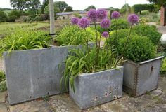 Zinc galvanised water tanks make god planters. Could add interest where the step/level change is introduced. Plants, Galvanized Planters, Outdoor Gardens, Garden Inspiration, Planters, Galvanized Water Tank, Garden Pots, Garden Containers, Metal Water Tank