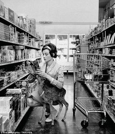Everyday life: Hepburn takes her pet fawn Pippa or 'Ip' shopping in Gelson's supermarket, in Beverly Hills