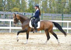 Akhal-Teke. The Akhal-Teke, due to its natural athleticism, can be a sport horse, good at dressage, show jumping, eventing, racing, and endurance riding.