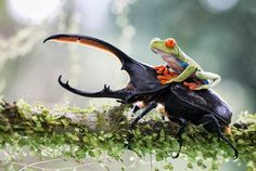 .Frog having a free ride