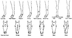 1000  images about  u262aequine markings u262a on pinterest