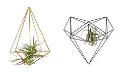 Plantas aéreas são tendência! Veja muitas ideias para exibi-las em casa.