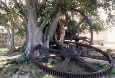 Google Image Result for http://www.juventudrebelde.cu/file/img/fotografia/2009/10/1245-fotografia-g.jpg