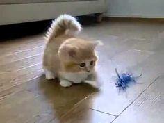 Suscríbete También A Nuestro Facebook: https://www.facebook.com/pages/Los-Mejores-Videos-De-Risa/531744716857814 El Gato Mas Tierno Del Mundo. Videos de gato...
