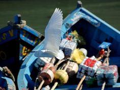 laure essaouira barque bleu animal oiseau Fishing Boats, Black And White, Outdoor Decor, Blue, Animaux, Black White, Blanco Y Negro, Black N White