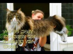 Top 10 Most Expensive Cat Breeds In The World Exploding Kittens Card Game, Cats Meowing, Most Expensive, Cat Breeds, Card Games, World, Cute, Top, Animals