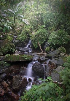 Tropical Rainforest by SecretSquirrel (Photo) | Weather Underground