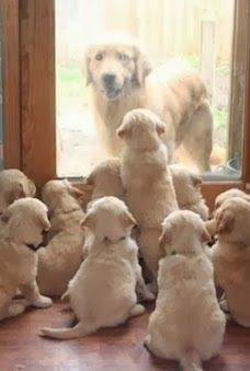 This is adorable. :D All the puppies waiting for their mom.