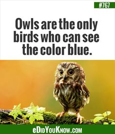 http://edidyouknow.com/did-you-know-767/ Owls are the only birds who can see the color blue.