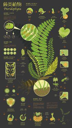 Forrest Trees Illustration Vintage Print 4 - Trees Poster - Trees Art - Home Decor - Home Art - Kitchen Art - Botanical - Larousse Science Illustration, Plant Illustration, Botanical Illustration, Illustration Inspiration, Creative Infographic, Timeline Infographic, Information Design, Anatomy Art, Botanical Art