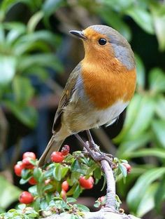 My favourite bird