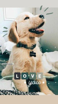 Instagram Selfie, Foto Instagram, Instagram And Snapchat, Instagram Story Ideas, Creative Instagram Stories, Cute Photos, Dog Photos, Dogs Tumblr, Dog Stories