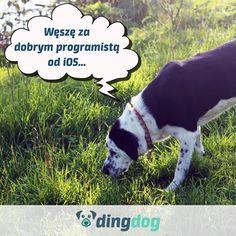 Szukamy programisty  #praca #programista #iOS #work #DingDog