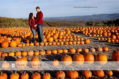 Fall engagement photos in a pumpkin patch hudson valley ny
