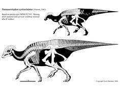 An image gallery featuring Scott Hartman's skeletal drawings of the beaked, ornithischian dinosaurs. Dinosaur Drawing, Dinosaur Art, Dinosaur Fossils, Skeleton Drawings, Skeleton Art, Prehistoric Dinosaurs, Prehistoric Creatures, Reptiles, Mammals
