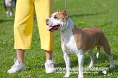 Leash training is a part of dog training which is considerably underestimated by new dog owners. The training process is fairly simple and will take only a limited amount of your time. Leash Training, Training Your Dog, Question And Answer, This Or That Questions, Dog Owners, Pitbulls, Dogs, Animals, Animales