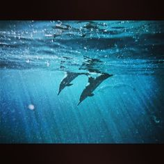 .@scubabum513 | Not the best quality but first time see dolphins underwater. Very stoked i go... | Webstagram - the best Instagram viewer