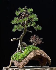 Die 233 Besten Bilder Von Ikebana Bonsai Etc Terrariums Garden