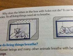 """""""O Grito do Bicho"""": Livro escolar indiano sugere asfixiar gatos como e..."""