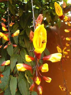 Uma das Flores Que Suportam o Sol Forte chama-se Sapatinho de Judia Agaves, Plantar, Tropical Garden, Handmade Flowers, Flower Pots, Exterior, Glitter, Urban Gardening, Wheelbarrow Garden