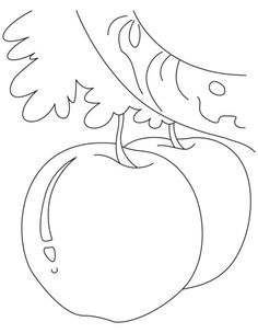 apple coloring picture for kids download free apple coloring picture for kids for kids