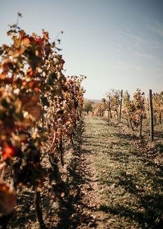 Anzeige: Man bringe den Grünen Veltliner – Ausflug zum Weinviertel DAC Influencer, Vineyard, Country Roads, Travel, Outdoor, Roman Snail, Day Trips, Red Wine, Places