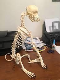 Image Result For Pug Skeleton Pugs Skeleton Image